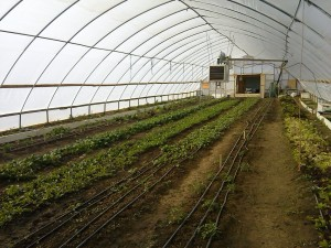 Red Willow's furnace heated greenhouse