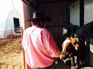 Validating steers.