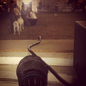 View from the announcers stand at the goat show at the Kit Carson County Fair.