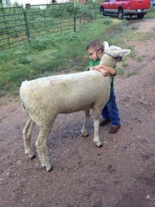 Grayson working with his lamb the week before the fair.