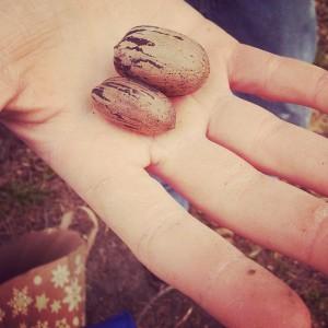 pecans in hand