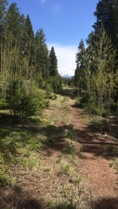 Hiking is one of the great recreation activities we have in the community. The woods behind my house is my favorite place to hike.