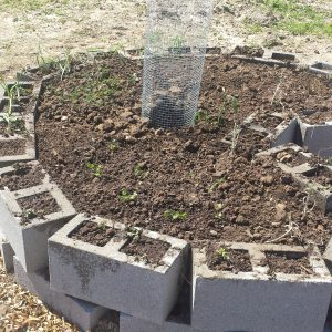 """Here is one  of the raised beds just after building it. The design is called a """"keyhole"""", and the main feature is the hollow center for compost!"""