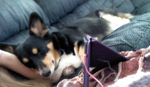 One of the best parts of getting to live and work in Arnold over the summer - corgi cuddles.