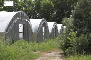 5 of the 17 greenhouses recently acquired by the Seguin LULAC Foundation. These greenhouses will both be sold with the proceeds going towards sustainaing further internships/apprenticeships in Seguin while others will be donated to agriculture education organizations.