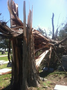 A tree in the Arnold Cemetery that fell down.