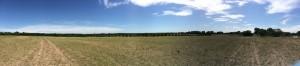 A gorgeous Kansas afternoon.