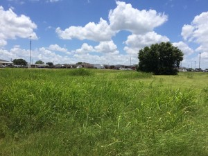 This is the 2-acre plot. It looks like an overgrown, slightly neglected field, but can you see the potential? We can!