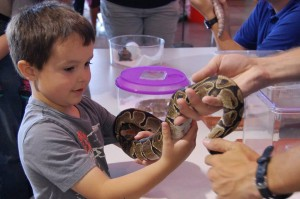 child getting to hold a snake while learning about retiles through the Science Spectrum