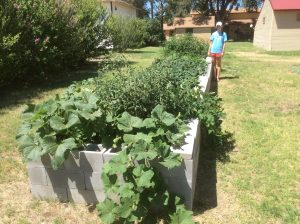 A picture with the growing garden.